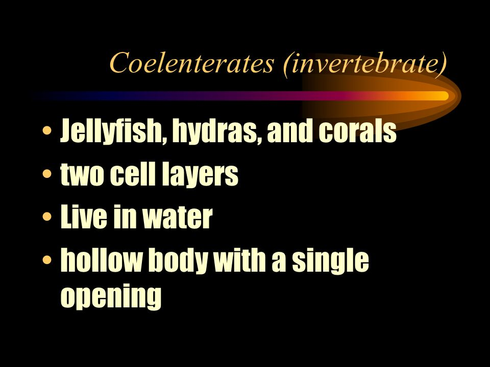 Coelenterates (invertebrate)