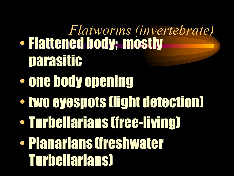 Flatworms (invertebrate)