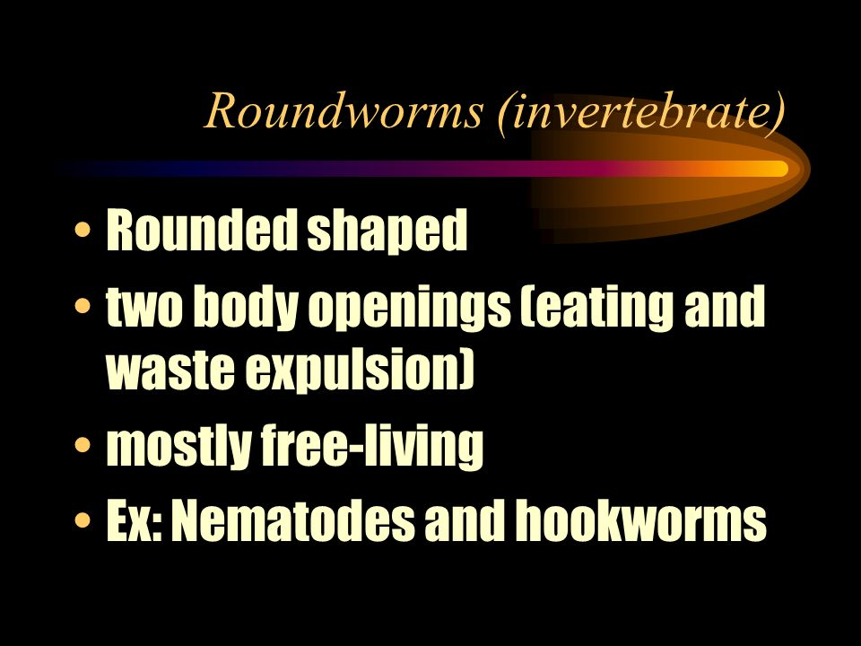 Roundworms (invertebrate)