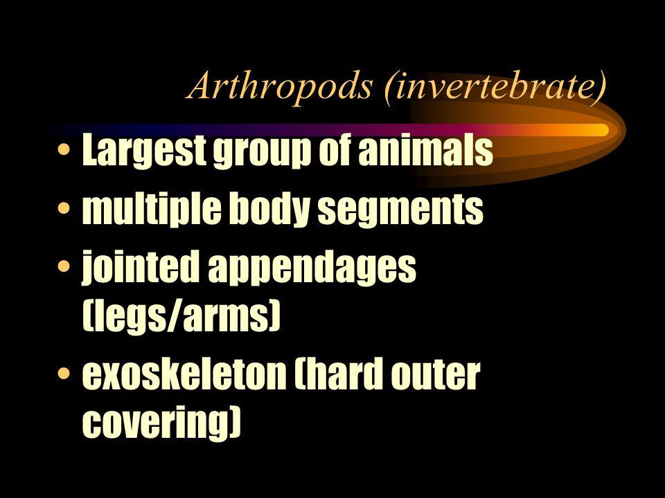 Arthropods (invertebrate)