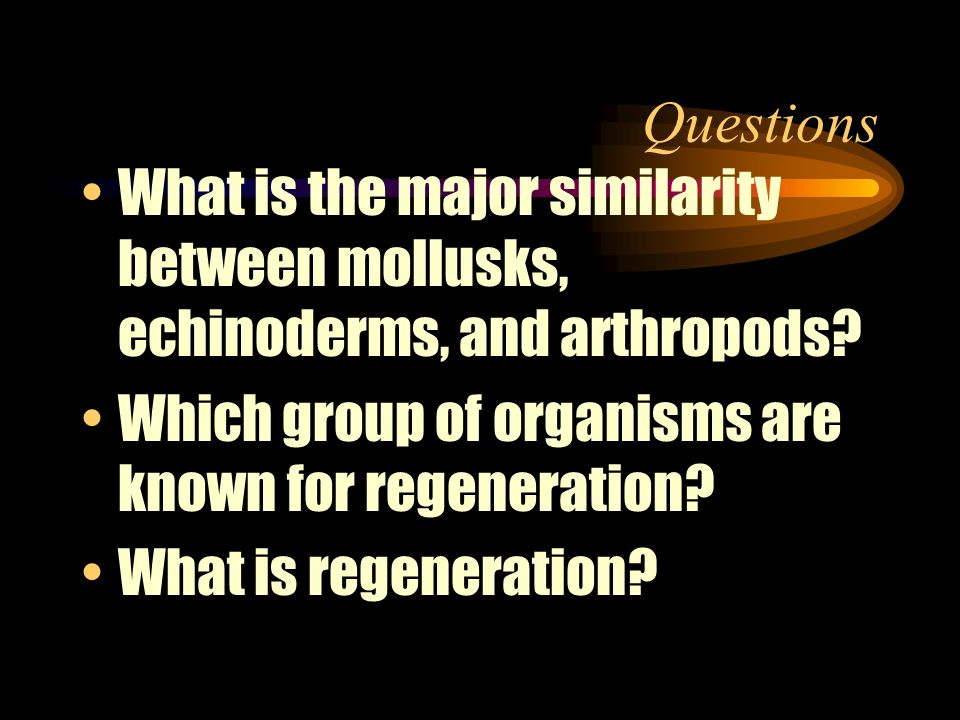Questions What is the major similarity between mollusks, echinoderms, and arthropods Which group of organisms are known for regeneration