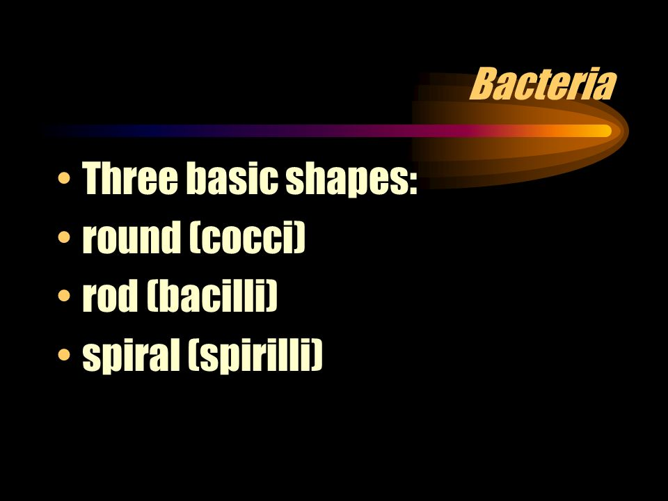 Bacteria Three basic shapes: round (cocci) rod (bacilli) spiral (spirilli)