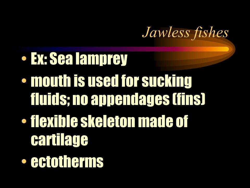Jawless fishes Ex: Sea lamprey. mouth is used for sucking fluids; no appendages (fins) flexible skeleton made of cartilage.