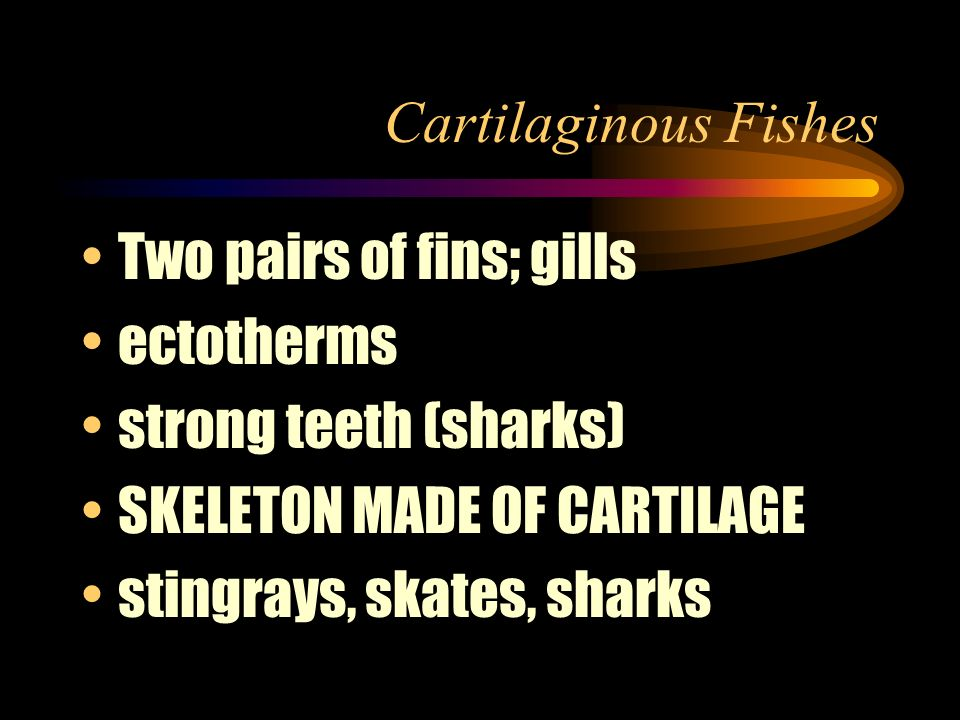 Cartilaginous Fishes Two pairs of fins; gills. ectotherms. strong teeth (sharks) SKELETON MADE OF CARTILAGE.