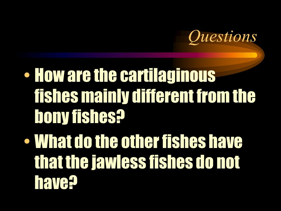 Questions How are the cartilaginous fishes mainly different from the bony fishes.
