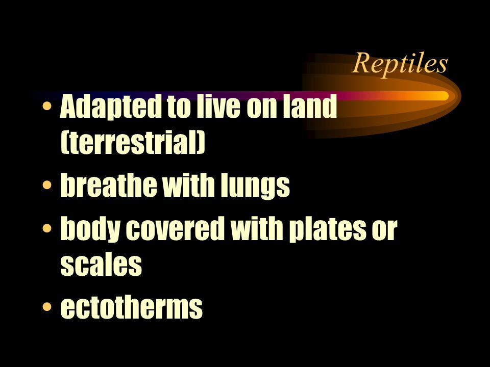 Reptiles Adapted to live on land (terrestrial) breathe with lungs. body covered with plates or scales.