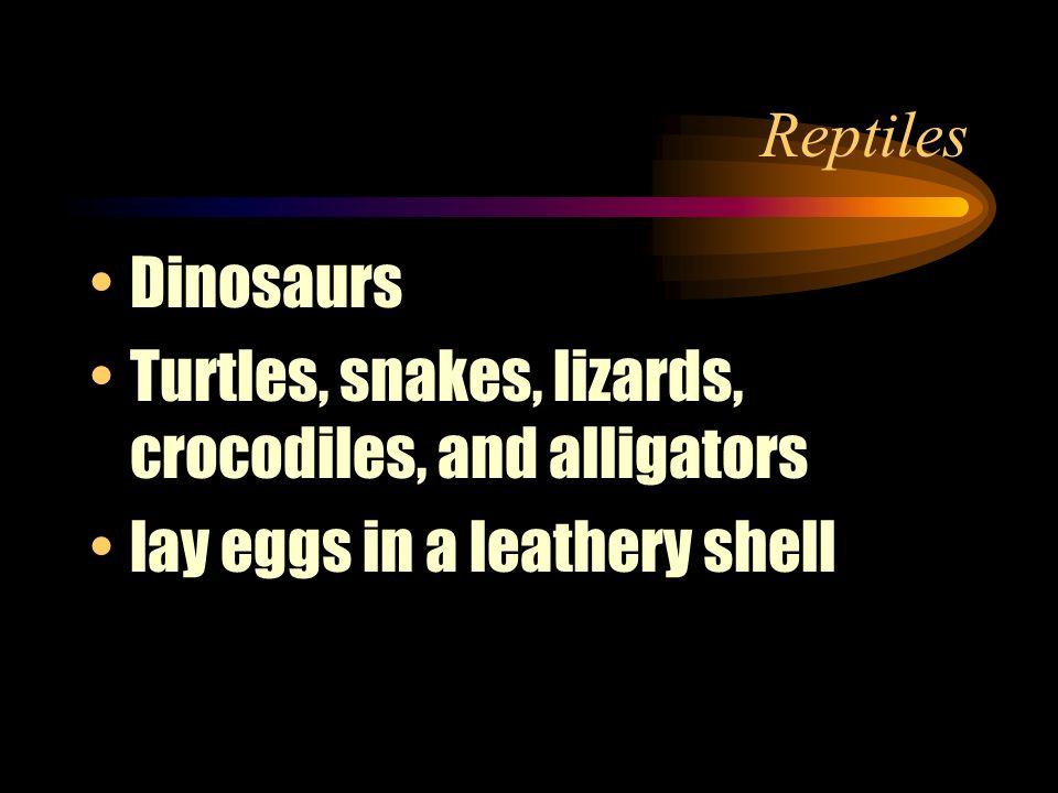 Reptiles Dinosaurs. Turtles, snakes, lizards, crocodiles, and alligators.
