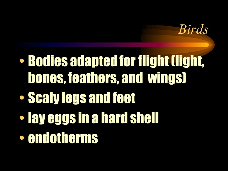 Birds Bodies adapted for flight (light, bones, feathers, and wings) Scaly legs and feet. lay eggs in a hard shell.
