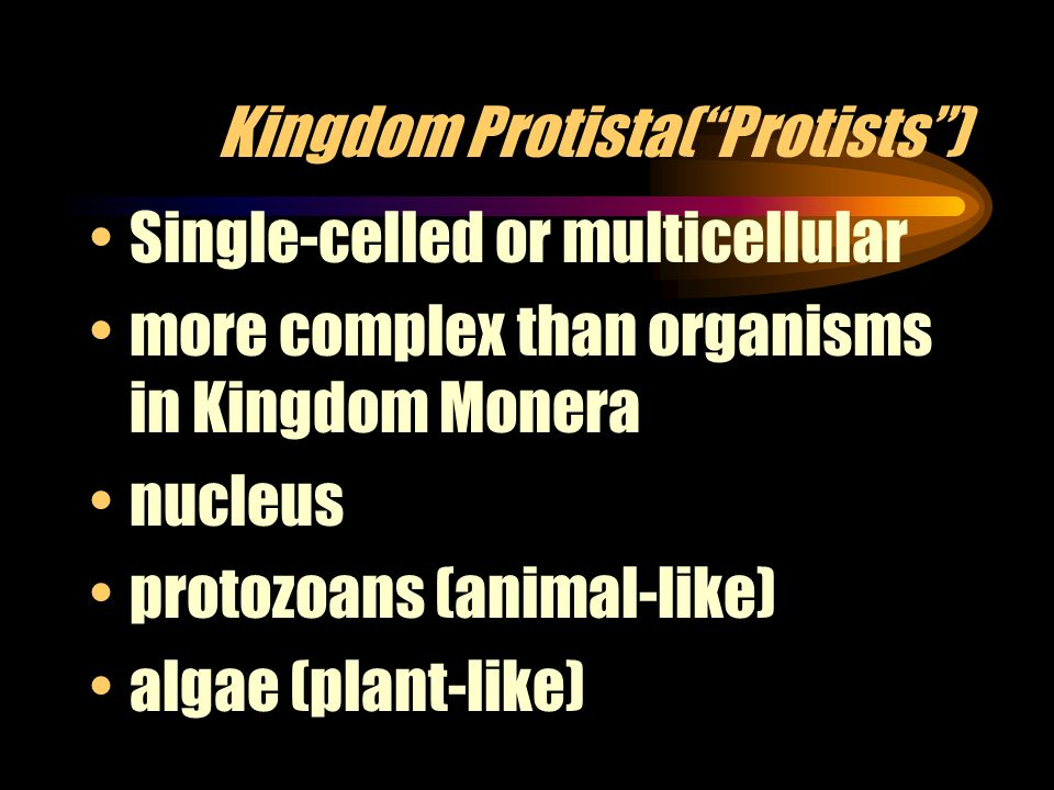 Kingdom Protista( Protists )