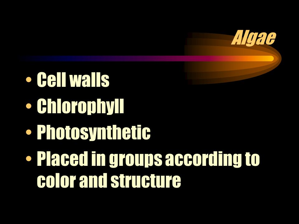 Algae Cell walls Chlorophyll Photosynthetic Placed in groups according to color and structure