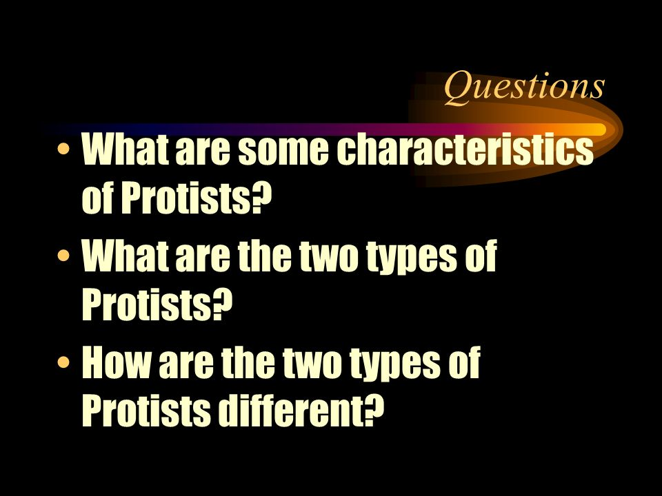 Questions What are some characteristics of Protists.