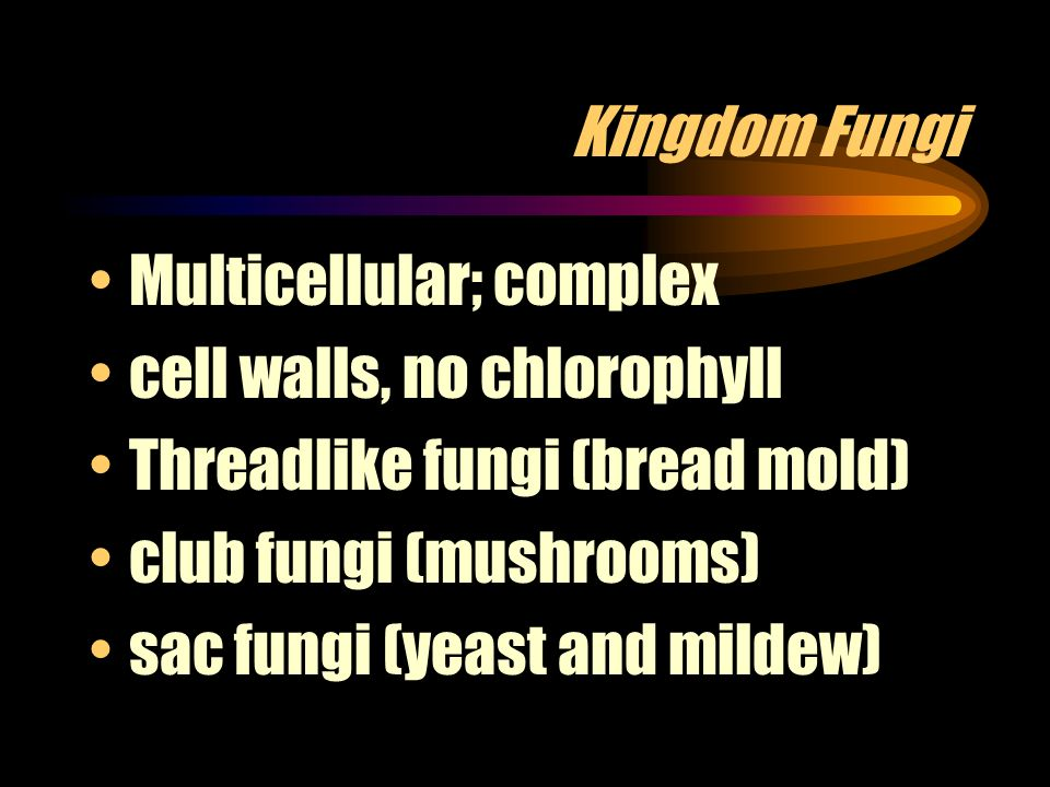 Kingdom Fungi Multicellular; complex. cell walls, no chlorophyll. Threadlike fungi (bread mold) club fungi (mushrooms)