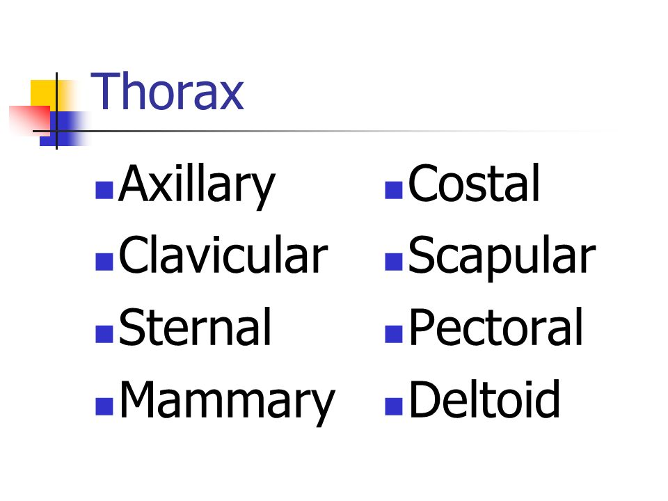 Thorax Axillary Clavicular Sternal Mammary Costal Scapular Pectoral