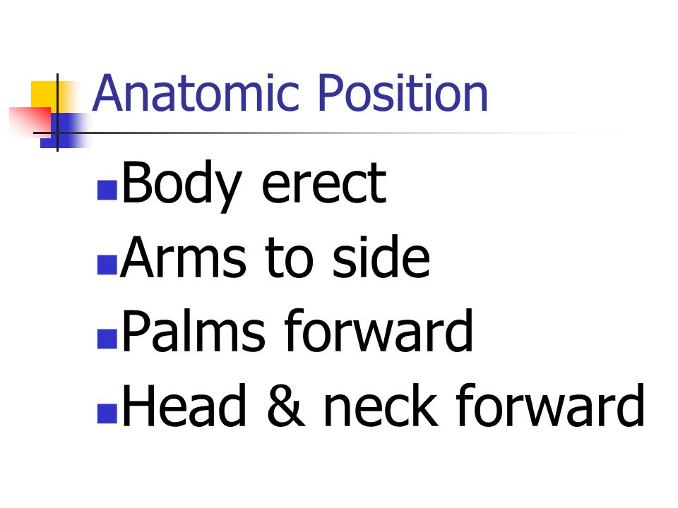 Body erect Arms to side Palms forward Head & neck forward