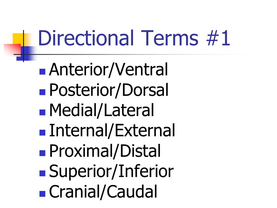 Directional Terms #1 Anterior/Ventral Posterior/Dorsal Medial/Lateral