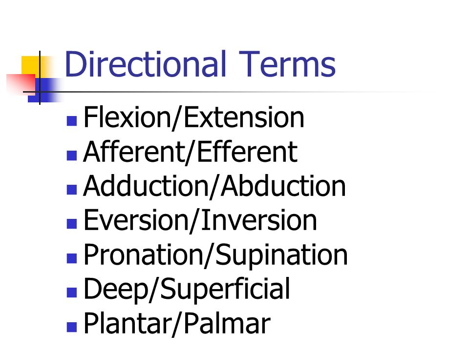 Directional Terms Flexion/Extension Afferent/Efferent