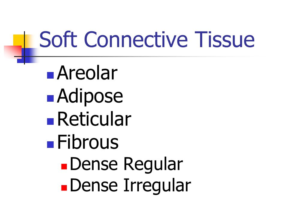 Soft Connective Tissue