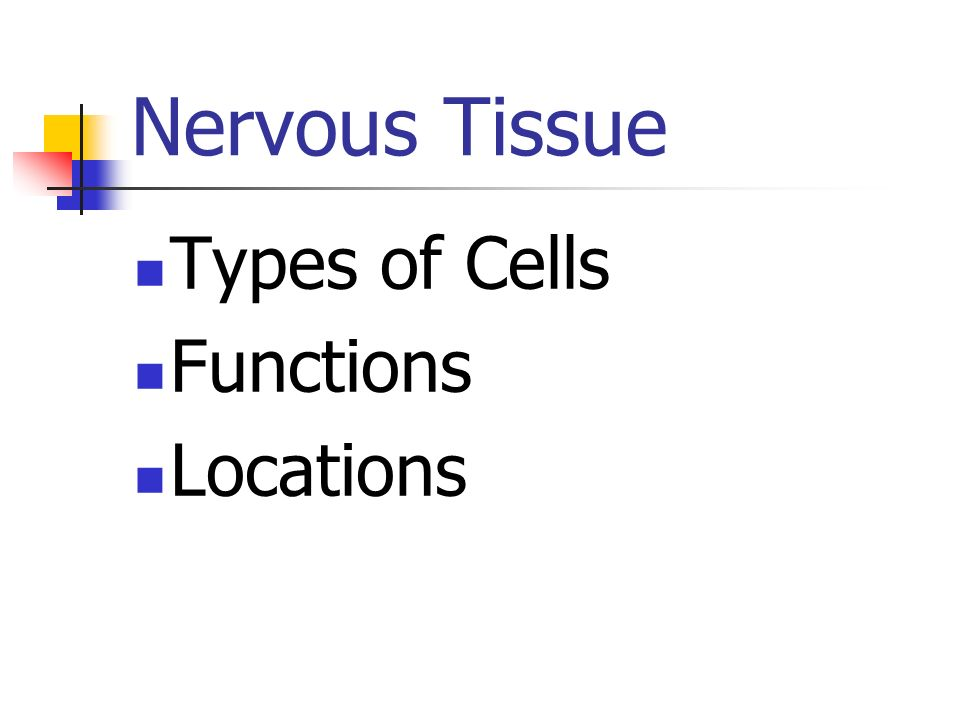 Nervous Tissue Types of Cells Functions Locations Nervous tissue