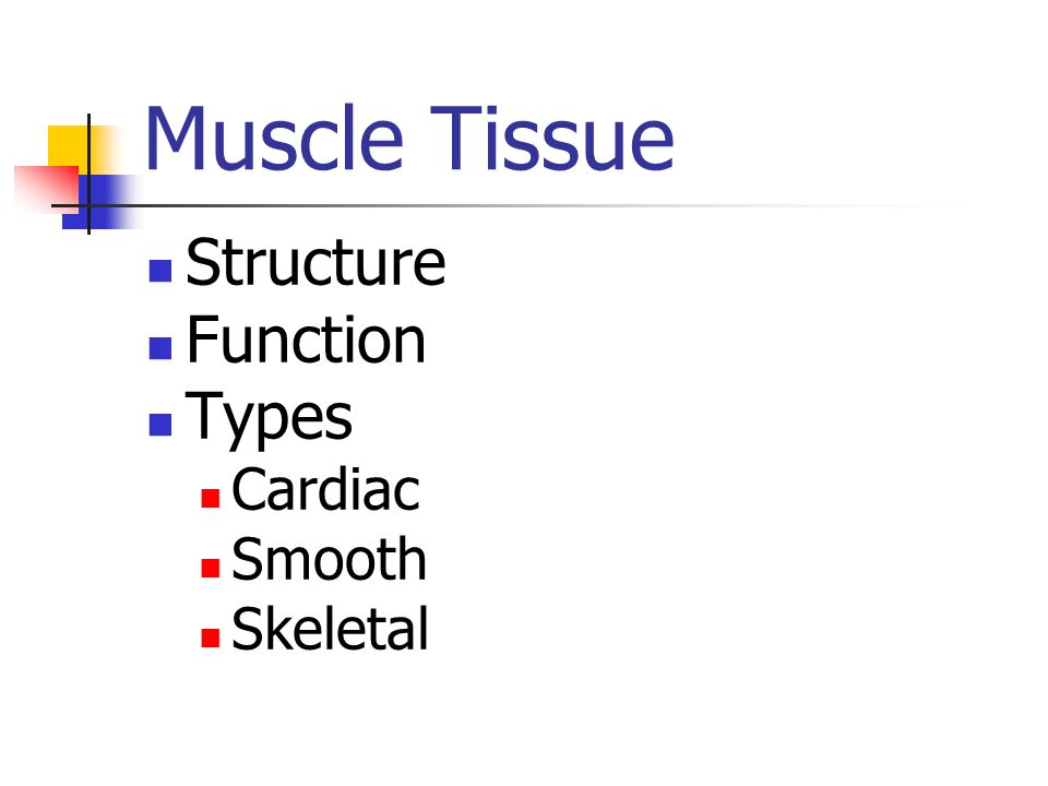 Muscle Tissue Structure Function Types Cardiac Smooth Skeletal