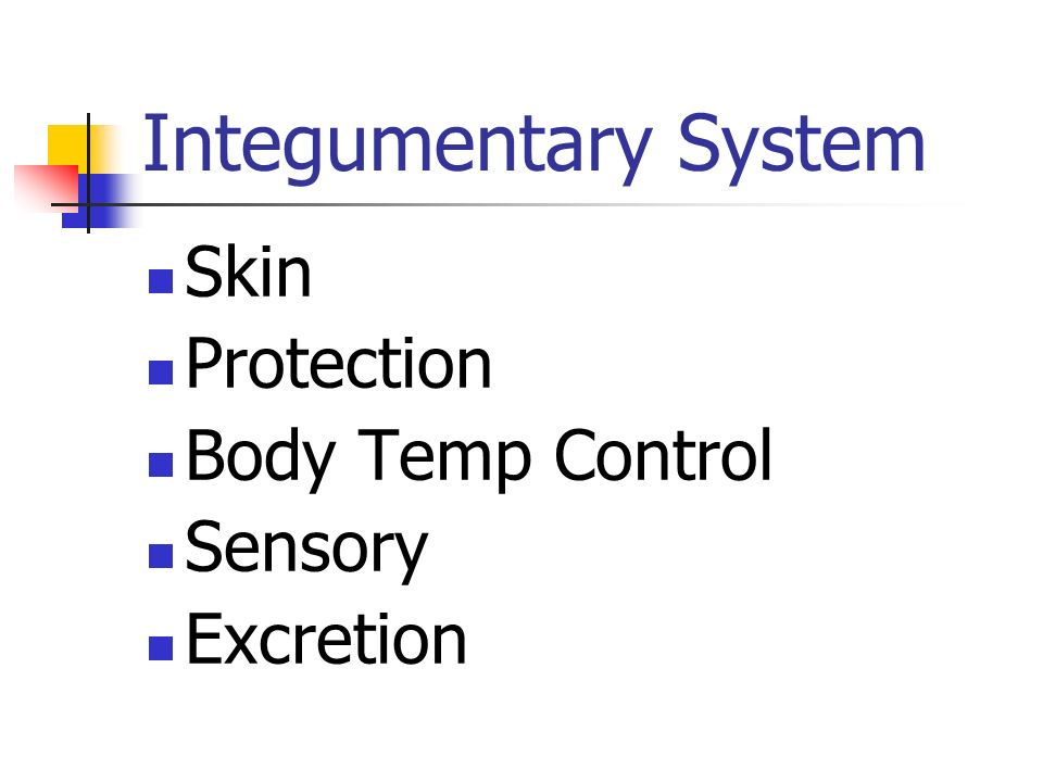 Integumentary System Skin Protection Body Temp Control Sensory