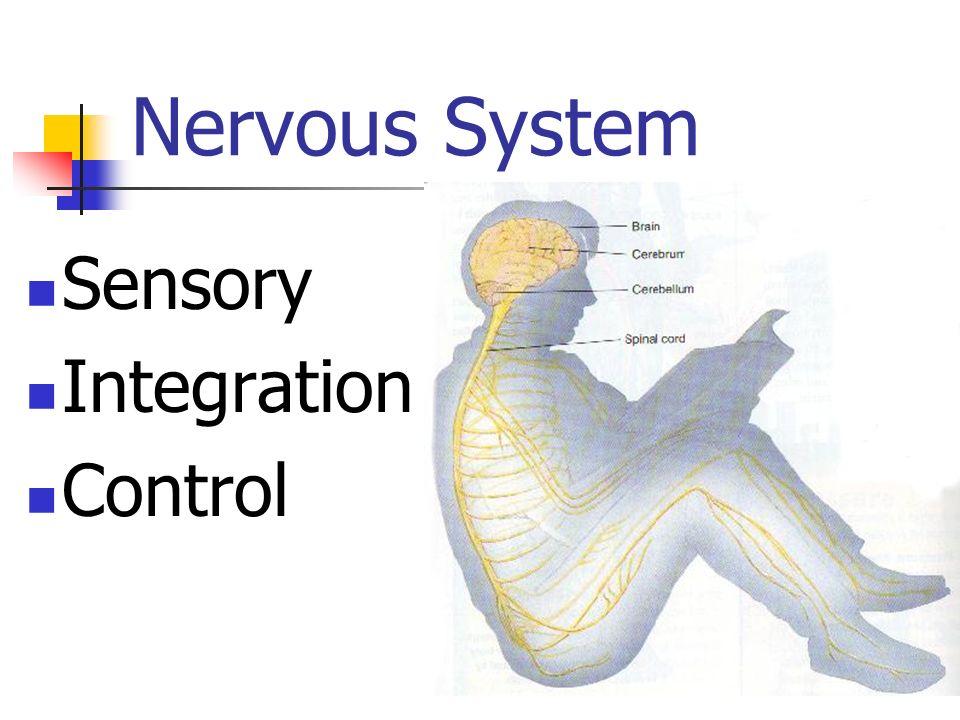 Nervous System Sensory Integration Control