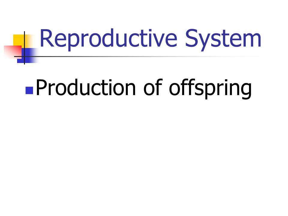Reproductive System Production of offspring