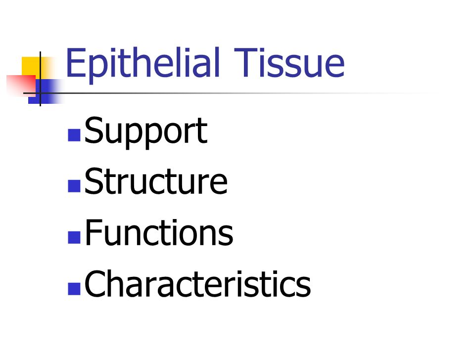 Epithelial Tissue Support Structure Functions Characteristics