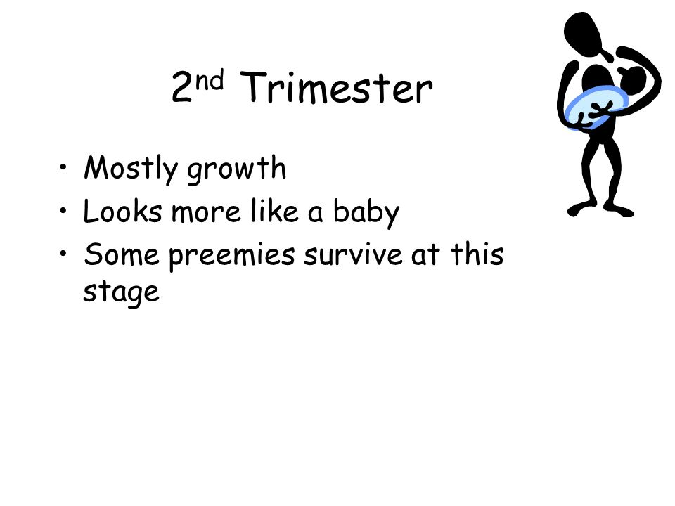 2nd Trimester Mostly growth Looks more like a baby