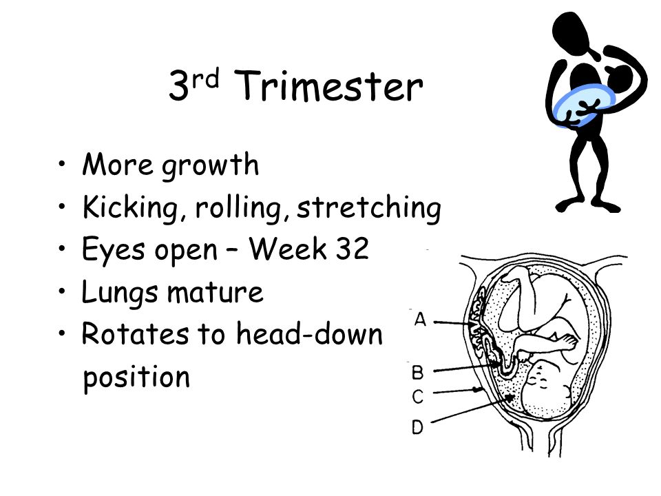 3rd Trimester More growth Kicking, rolling, stretching