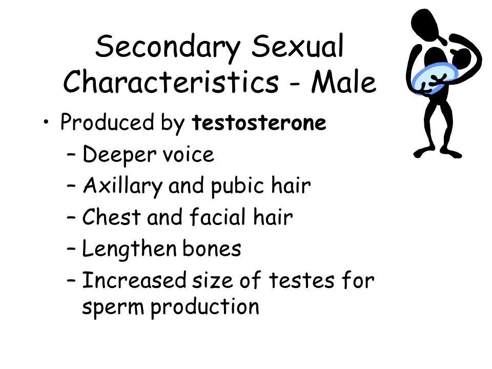 Secondary Sexual Characteristics - Male
