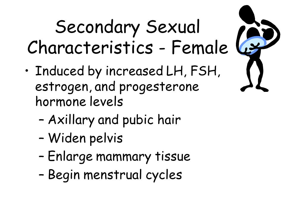 Secondary Sexual Characteristics - Female
