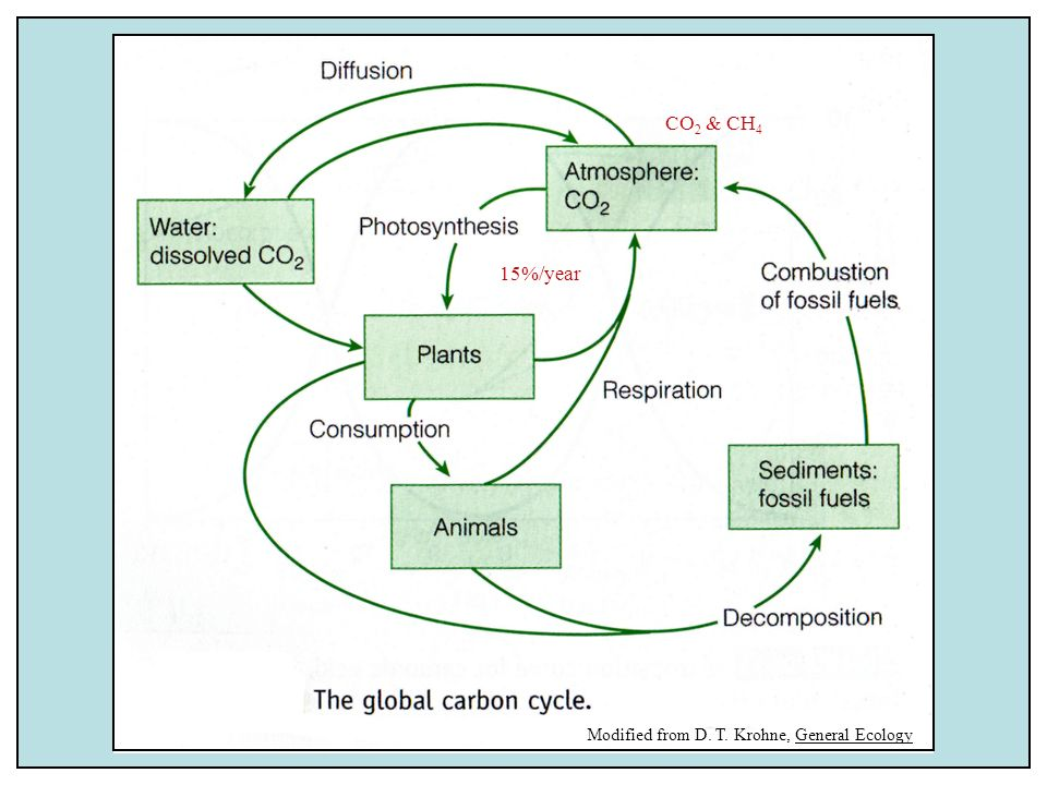 CO2 & CH4 15%/year Modified from D. T. Krohne, General Ecology