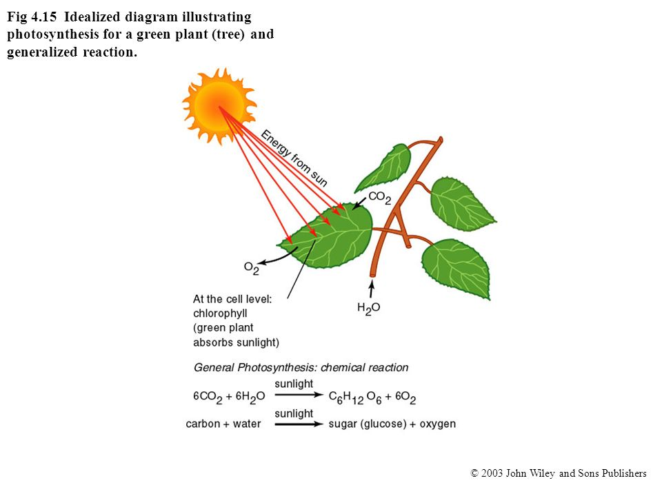 Fig 4.15 Idealized diagram illustrating photosynthesis for a green plant (tree) and generalized reaction.