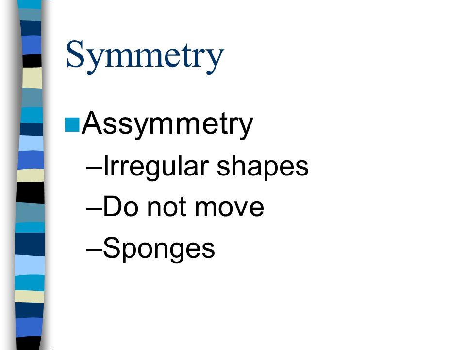 Symmetry Assymmetry Irregular shapes Do not move Sponges