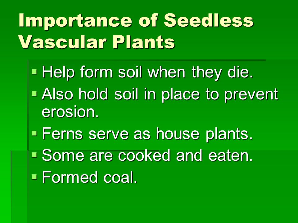 Importance of Seedless Vascular Plants