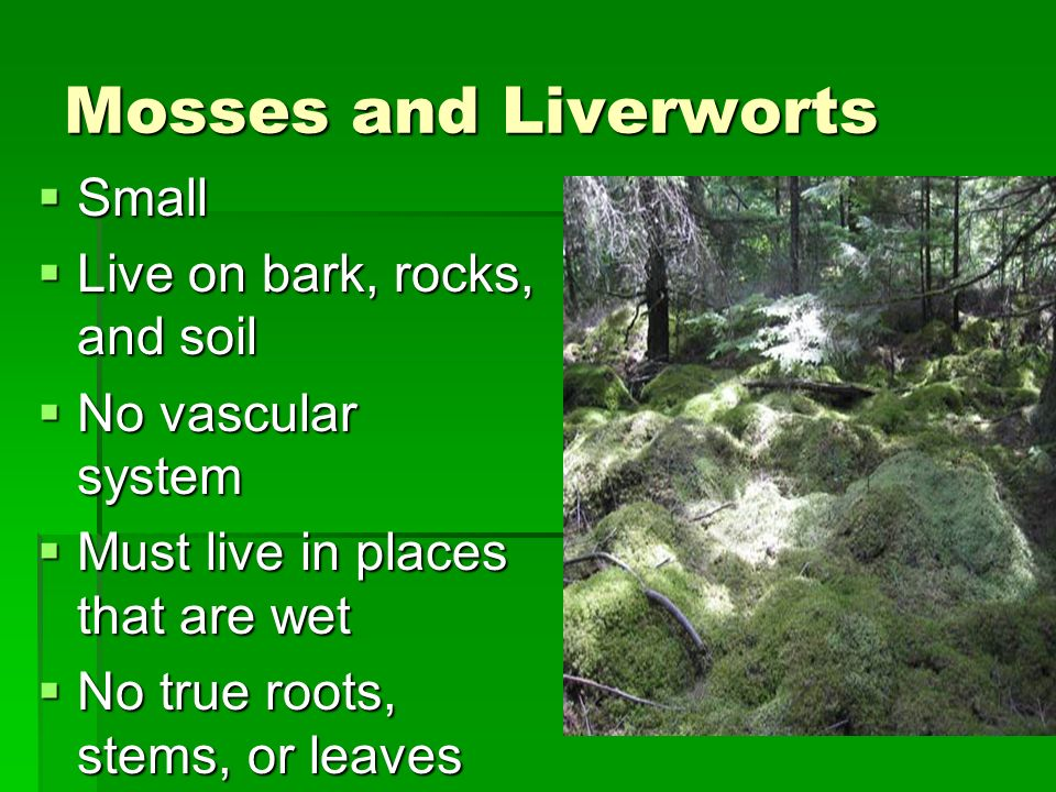 Mosses and Liverworts Small Live on bark, rocks, and soil