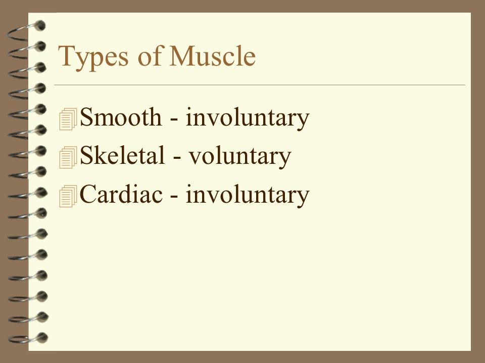 Types of Muscle Smooth - involuntary Skeletal - voluntary