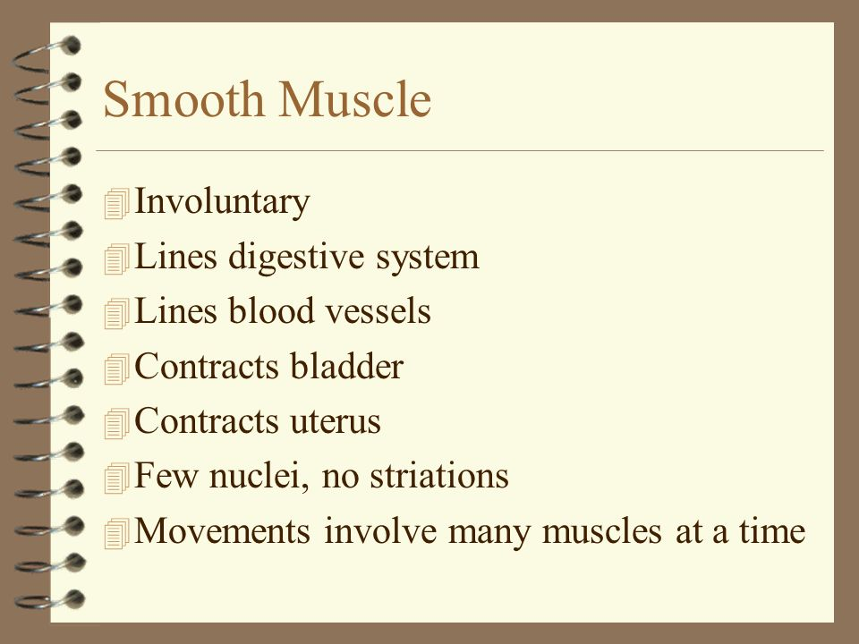Smooth Muscle Involuntary Lines digestive system Lines blood vessels