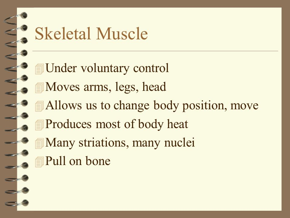 Skeletal Muscle Under voluntary control Moves arms, legs, head
