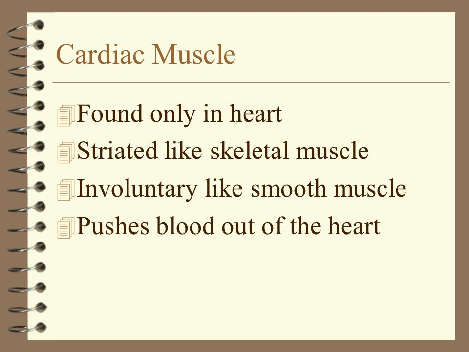 Cardiac Muscle Found only in heart Striated like skeletal muscle
