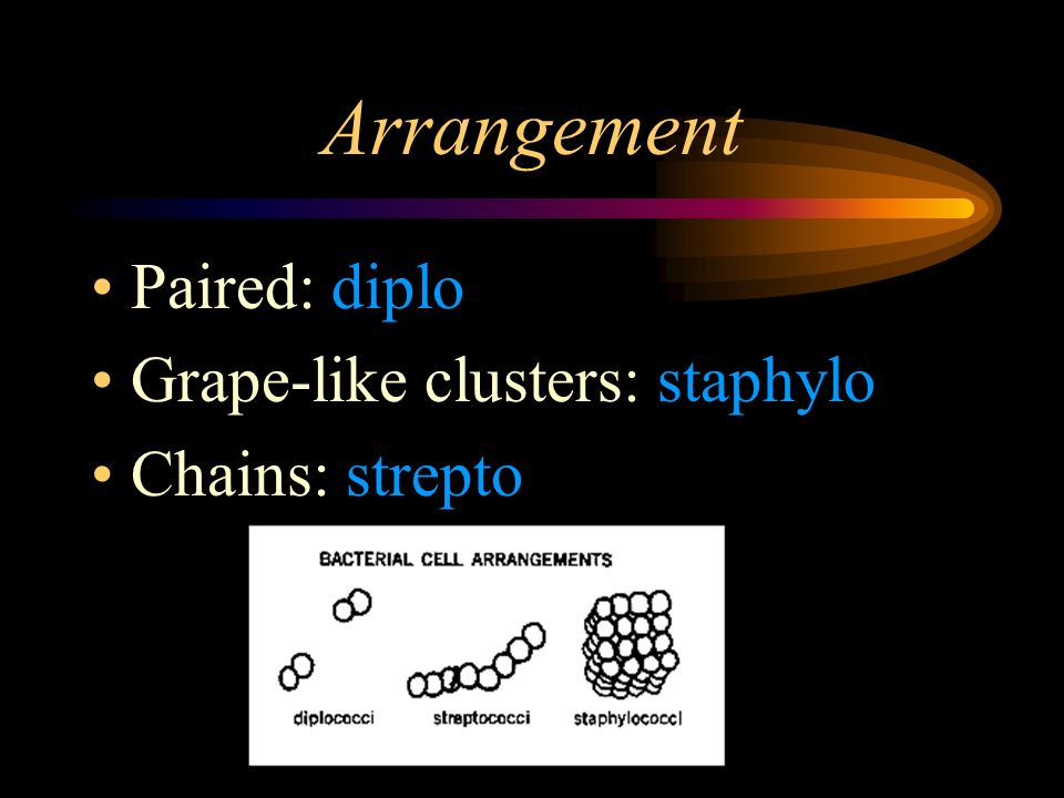 Arrangement Paired: diplo Grape-like clusters: staphylo