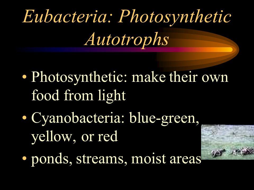 Eubacteria: Photosynthetic Autotrophs