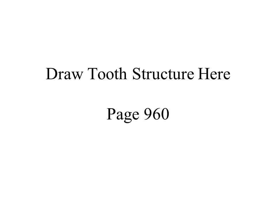 Draw Tooth Structure Here Page 960