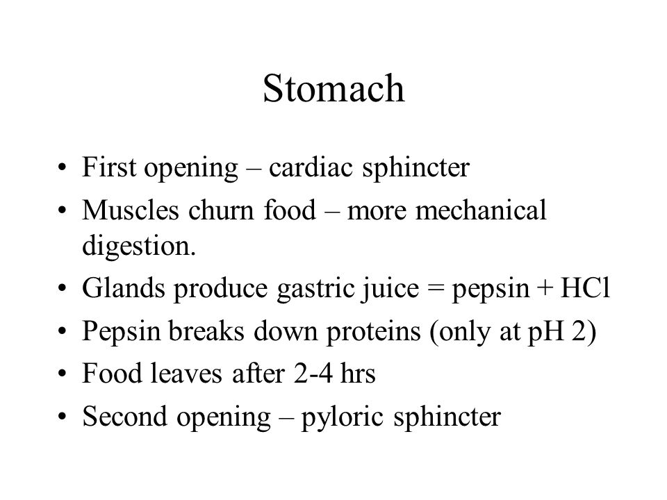 Stomach First opening – cardiac sphincter