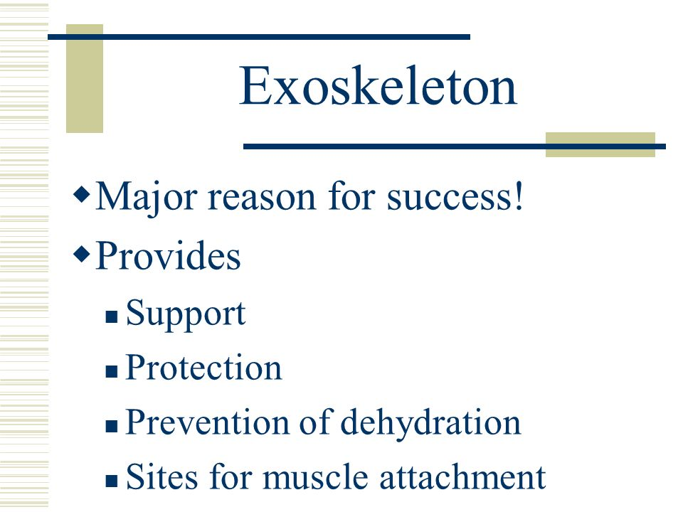 Exoskeleton Major reason for success! Provides Support Protection