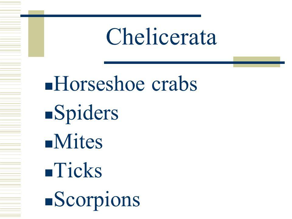 Chelicerata Horseshoe crabs Spiders Mites Ticks Scorpions