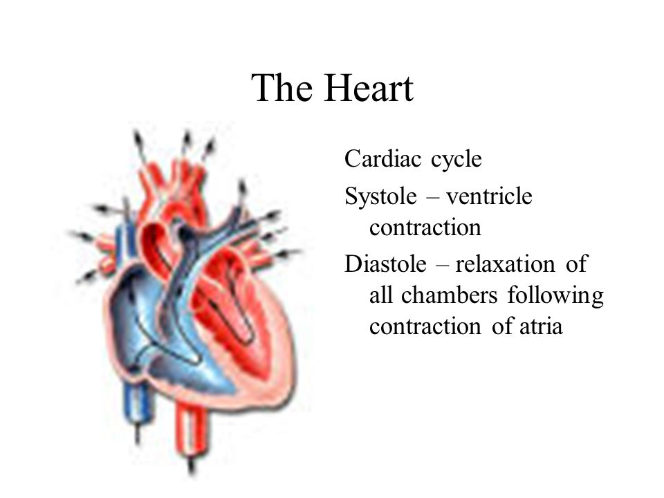 The Heart Cardiac cycle Systole – ventricle contraction