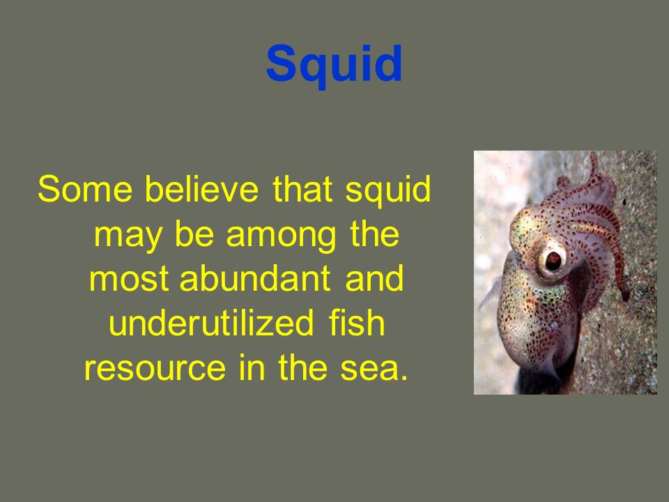 Squid Some believe that squid may be among the most abundant and underutilized fish resource in the sea.