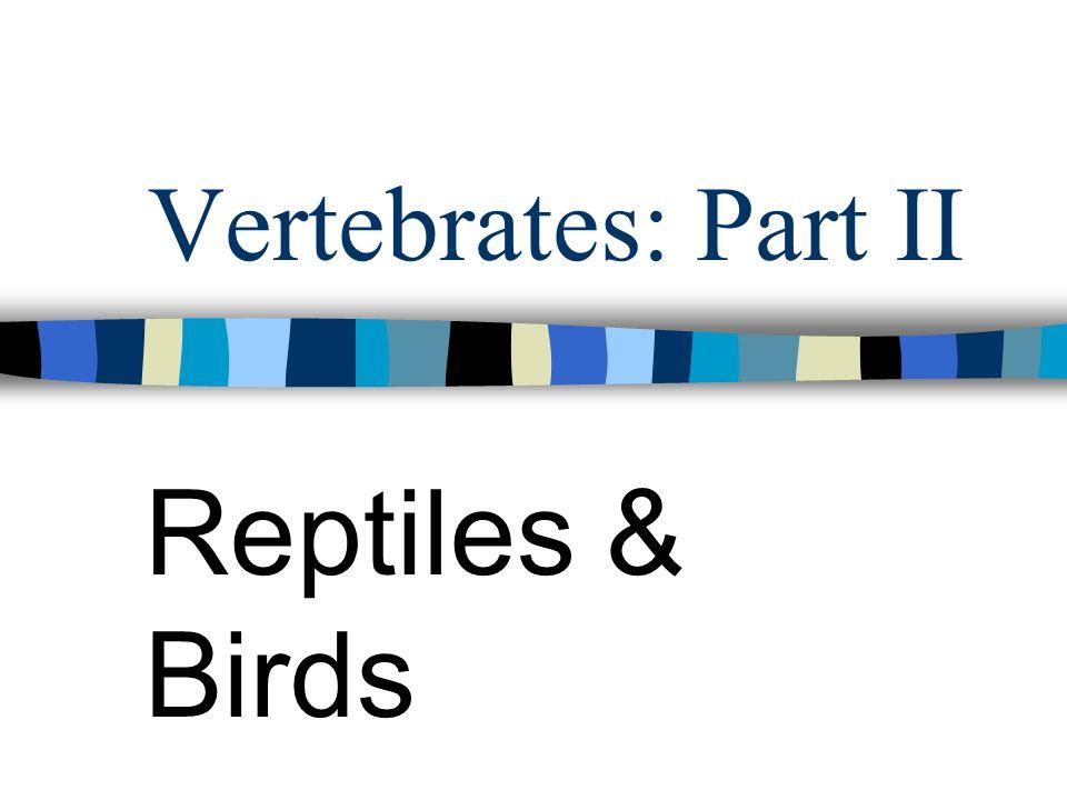 Vertebrates: Part II Reptiles & Birds