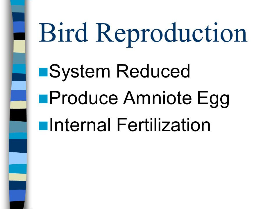 Bird Reproduction System Reduced Produce Amniote Egg